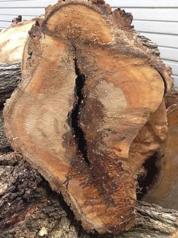 Arborist Tree Assesment