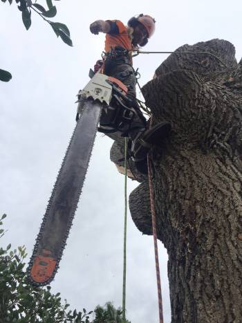Hazardous Tree Arborist Assesment In Lake Macquarie
