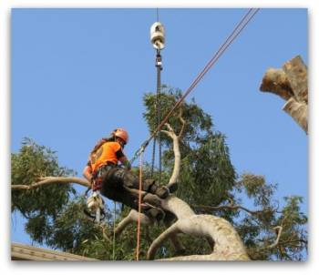 Tree Lopping Newcastle