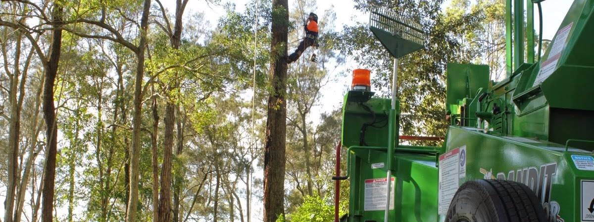 Lake Macquarie Tree Lopping