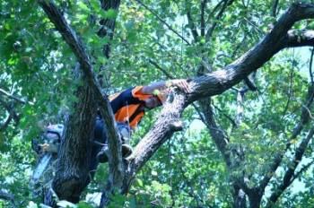 Tree Maintenance Newcastle